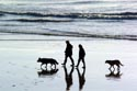 Walking the dogs on Hastings three miles of beach has been viewed 19730 times
