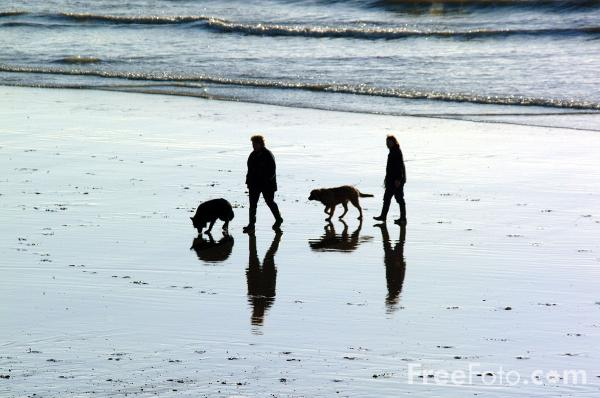 Picture of Walking the dogs on Hastings three miles of beach - Free Pictures - FreeFoto.com