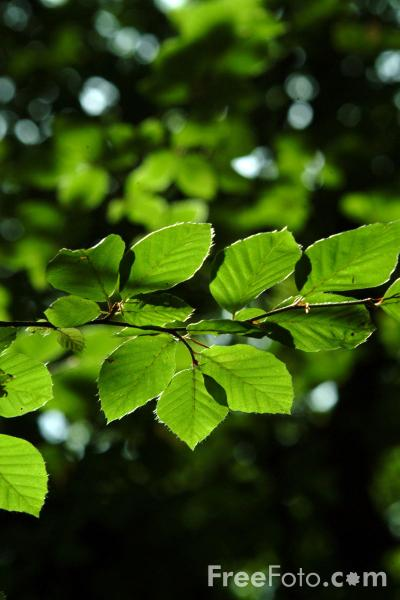 Picture of Leaves, New Forest, Hampshire - Free Pictures - FreeFoto.com