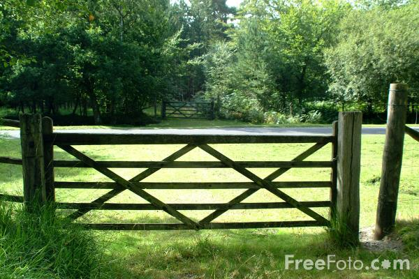 Picture of Gate, New Forest, Hampshire - Free Pictures - FreeFoto.com