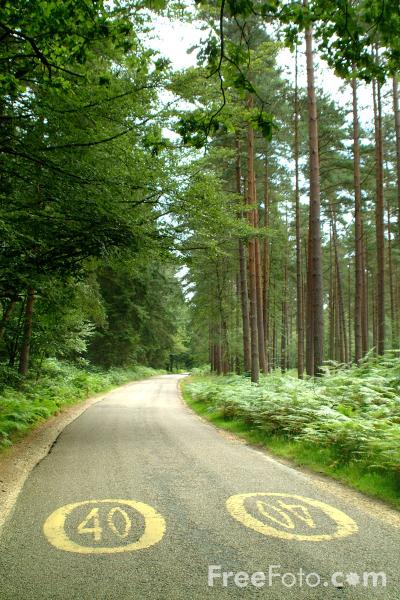 Picture of Forest Road, New Forest, Hampshire - Free Pictures - FreeFoto.com
