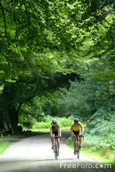 Picture of Cycling, The New Forest, Hampshire - Free Pictures - FreeFoto.com