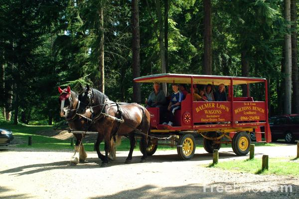 Picture of Wagon Ride, The New Forest, Hampshire - Free Pictures - FreeFoto.com