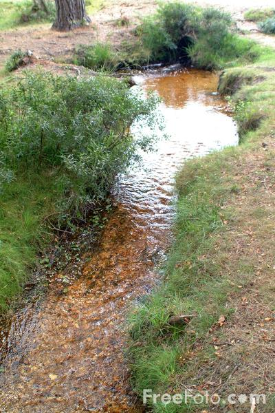 Picture of Stream, The New Forest, Hampshire - Free Pictures - FreeFoto.com