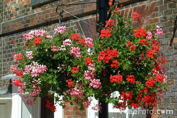 Picture of Hanging Baskets, Southampton, Hampshire - Free Pictures - FreeFoto.com
