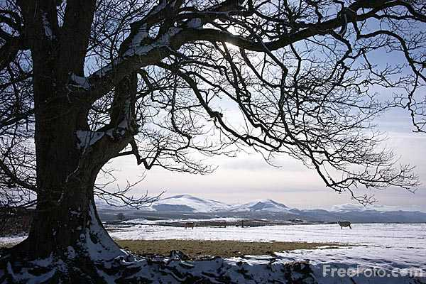Picture of Winter scene in the Lake District National Park - Free Pictures - FreeFoto.com