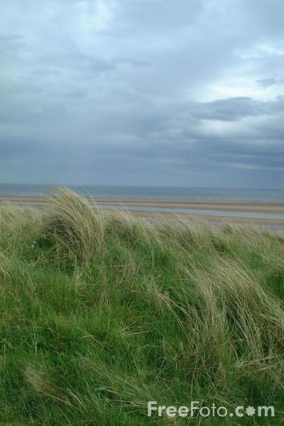 Picture of Grass, Beach, Alnmouth - Free Pictures - FreeFoto.com