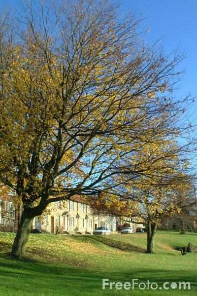 Picture of Village Green, Stamfordham, Northumberland - Free Pictures - FreeFoto.com