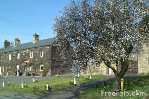 Picture of Whalton, Northumberland - Free Pictures - FreeFoto.com