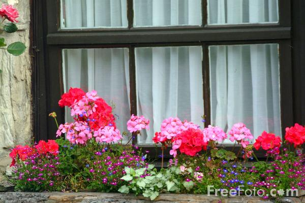 Picture of Window Box, Holy Island - Free Pictures - FreeFoto.com