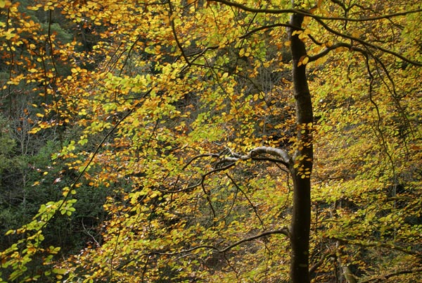 Picture of Autumn Colour, River Allen, Northumberland - Free Pictures - FreeFoto.com