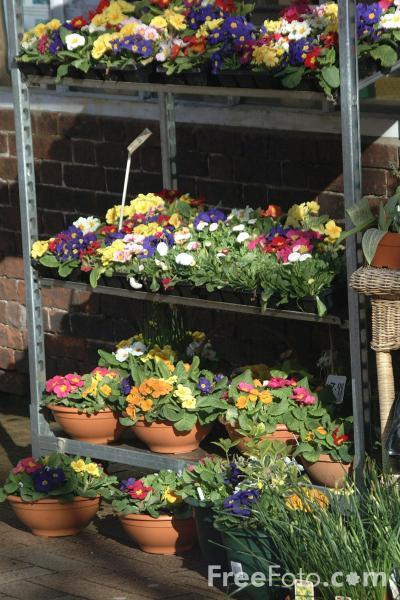 Picture of Flower Stall, Oswestry, Shropshire, England - Free Pictures - FreeFoto.com