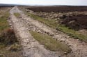 Lead Mining Trail, Edmundbyers Common has been viewed 4384 times