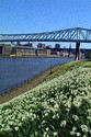Image Ref: 1043-25-52 - Queen Elizabeth II bridge, Newcastle upon Tyne, Viewed 4825 times