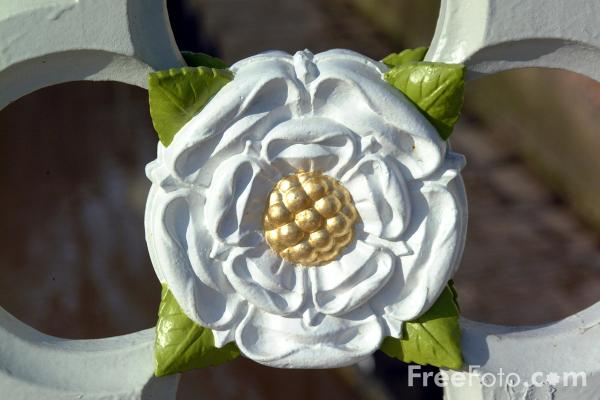 Picture of White Rose - Lendal Bridge - Free Pictures - FreeFoto.com