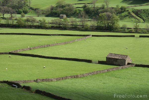 Traditional Field Barns Gunnerside Swaledale Pictures