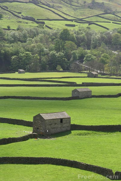 Picture of Traditional field barns, Gunnerside, Swaledale. - Free Pictures - FreeFoto.com