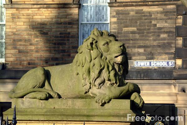 Picture of One of the stone lions outside the Victoria Hall - Free Pictures - FreeFoto.com