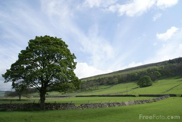 Picture of Tree, Wharfedale - Free Pictures - FreeFoto.com