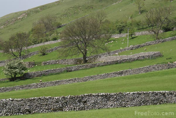 Picture of Wharfedale - Free Pictures - FreeFoto.com