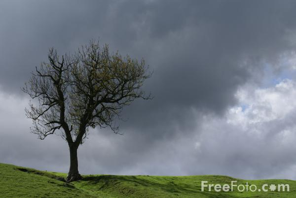 Picture of Tree, Langstrothdale - Free Pictures - FreeFoto.com