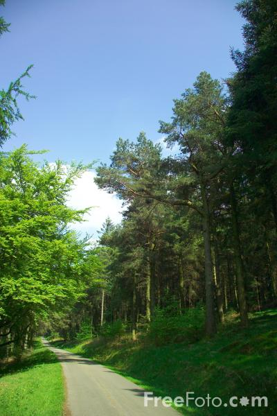 Picture of Tree Lined Road, Cwmcarn Forest, Caerphilly, South Wales - Free Pictures - FreeFoto.com