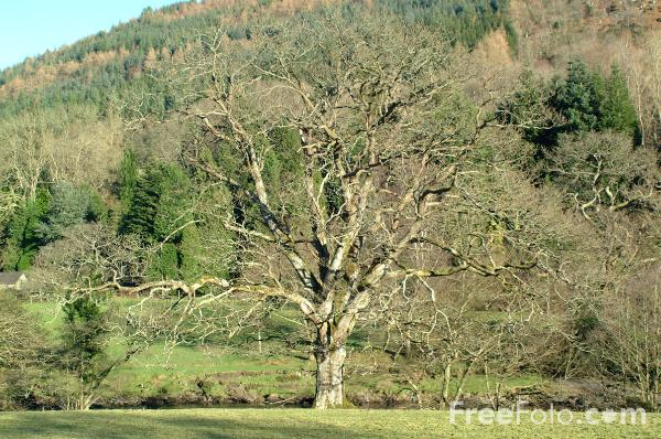 Picture of Betws-Y-Coed - Free Pictures - FreeFoto.com