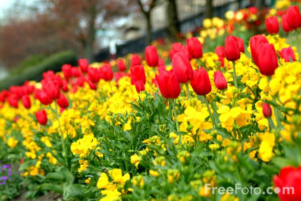 Picture of Princes Street Gardens, Edinburgh - Free Pictures - FreeFoto.com