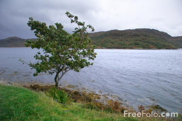 Picture of Loch Sunart - Free Pictures - FreeFoto.com