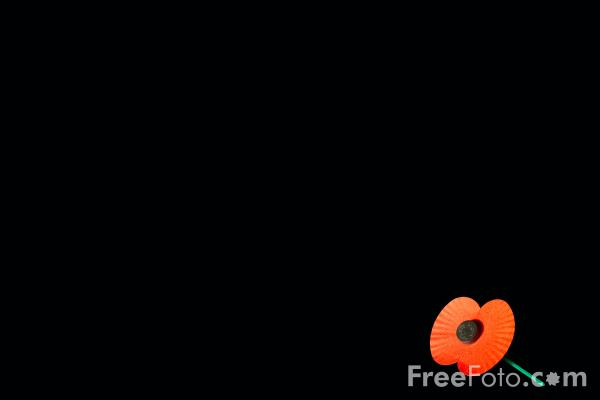 Picture of Red Poppy, Remembrance Sunday - Free Pictures - FreeFoto.com