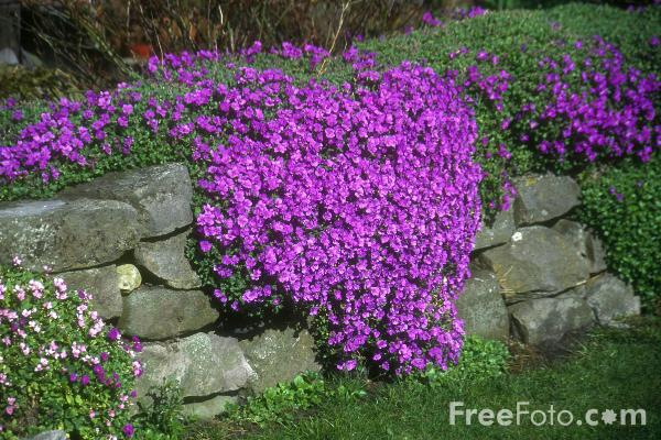 Picture of Rockery Plants - Free Pictures - FreeFoto.com