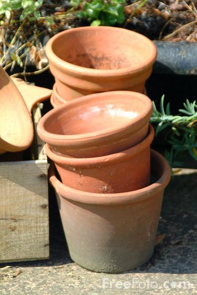 Picture of Plant Pots - Free Pictures - FreeFoto.com