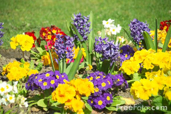 http://www.freefoto.com/images/12/13/12_13_3---Flowers-in-a-Garden-Border_web.jpg