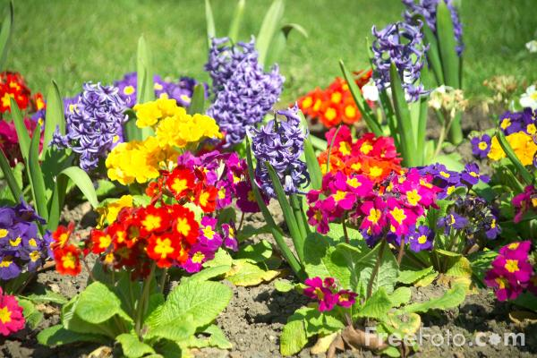 http://www.freefoto.com/images/12/13/12_13_4---Flowers-in-a-Garden-Border_web.jpg