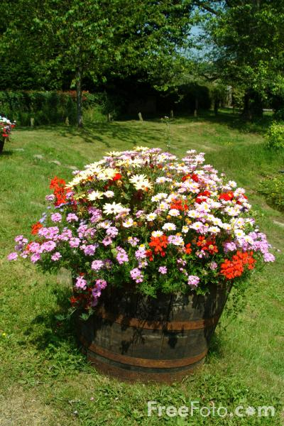 Picture of Flowers in a Tub - Free Pictures - FreeFoto.com