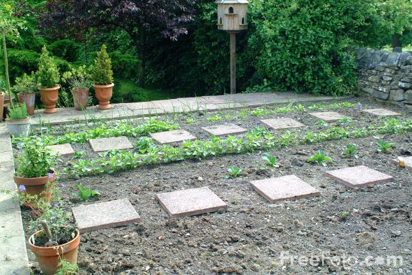 Picture of Vegetable Garden - Free Pictures - FreeFoto.com