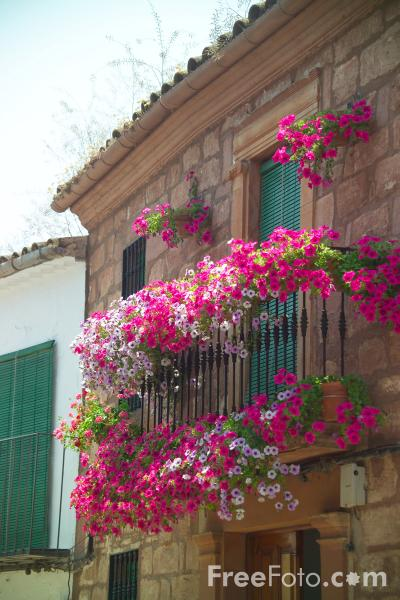 Picture of Window Boxes - Free Pictures - FreeFoto.com