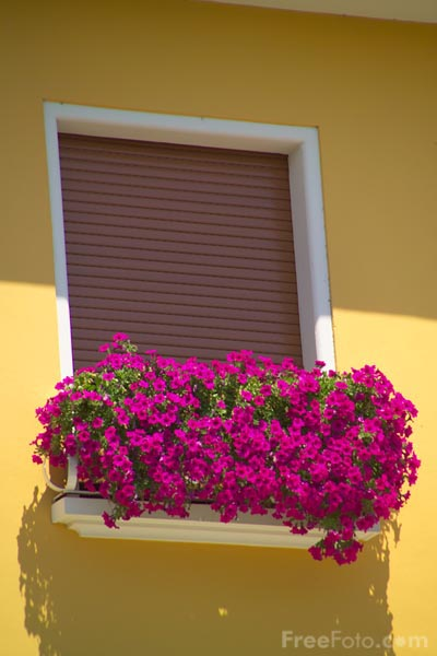 Picture of Window Box - Free Pictures - FreeFoto.com