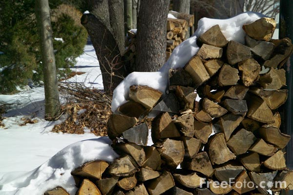 Picture of Firewood - Free Pictures - FreeFoto.com