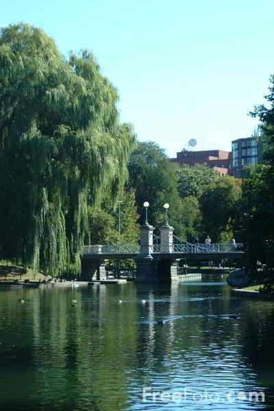 Picture of Boston Public Garden, Boston, Massachusetts - Free Pictures - FreeFoto.com