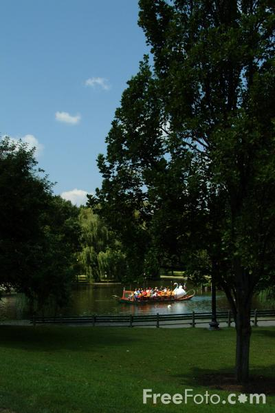 Picture of Swan Boats, Boston Public Garden, Boston, Massachusetts - Free Pictures - FreeFoto.com
