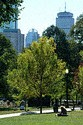 Image Ref: 1211-12-60 - Boston Common, Boston, Massachusetts, Viewed 8717 times