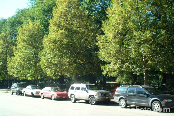 Picture of Parked cars, Boston, Massachusetts - Free Pictures - FreeFoto.com