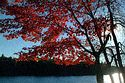 Image Ref: 1212-05-15 - Fall Color, Walden Pond, Massachusetts, Viewed 8888 times