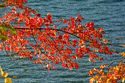 Fall Color, Walden Pond, Massachusetts has been viewed 9975 times