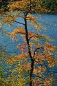 Image Ref: 1212-05-51 - Fall Color, Walden Pond, Massachusetts, Viewed 6157 times