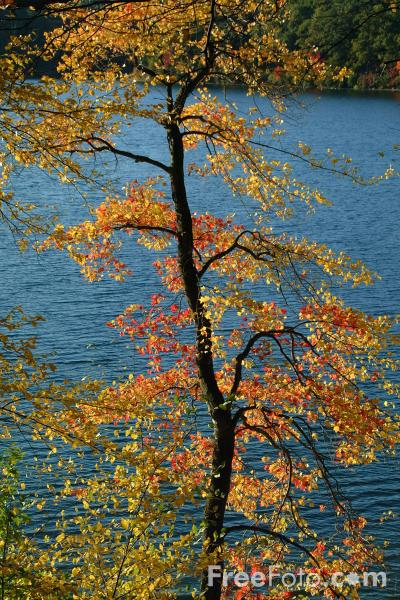 Picture of Fall Color, Walden Pond, Massachusetts - Free Pictures - FreeFoto.com