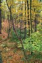 Fall Color, Walden Pond, Massachusetts has been viewed 11577 times