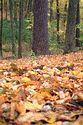 Image Ref: 1212-05-55 - Fall Color, Walden Pond, Massachusetts, Viewed 5681 times