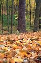 Image Ref: 1212-05-56 - Fall Color, Walden Pond, Massachusetts, Viewed 8414 times